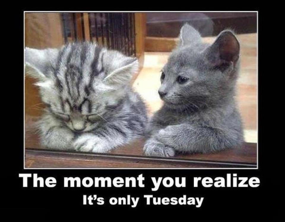 Pin By Calypso Communications On Funny Stuff Funny Animal Pictures Cute Cats Kittens Cutest