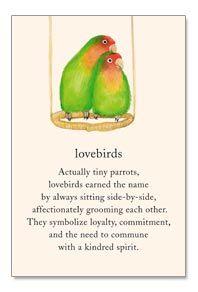 Lovebirds Love Birds Love Birds Quotes Lovebird Tattoo
