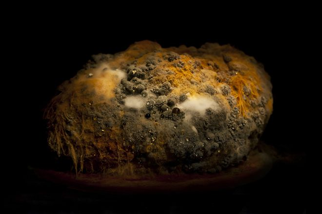 Swede mold