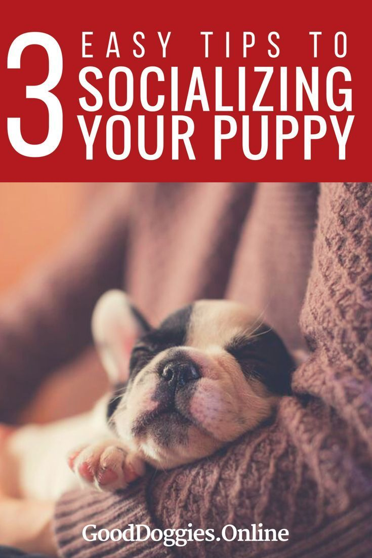 Check out these puppy training tips on socializing a puppy. These can also apply to adult dogs too!