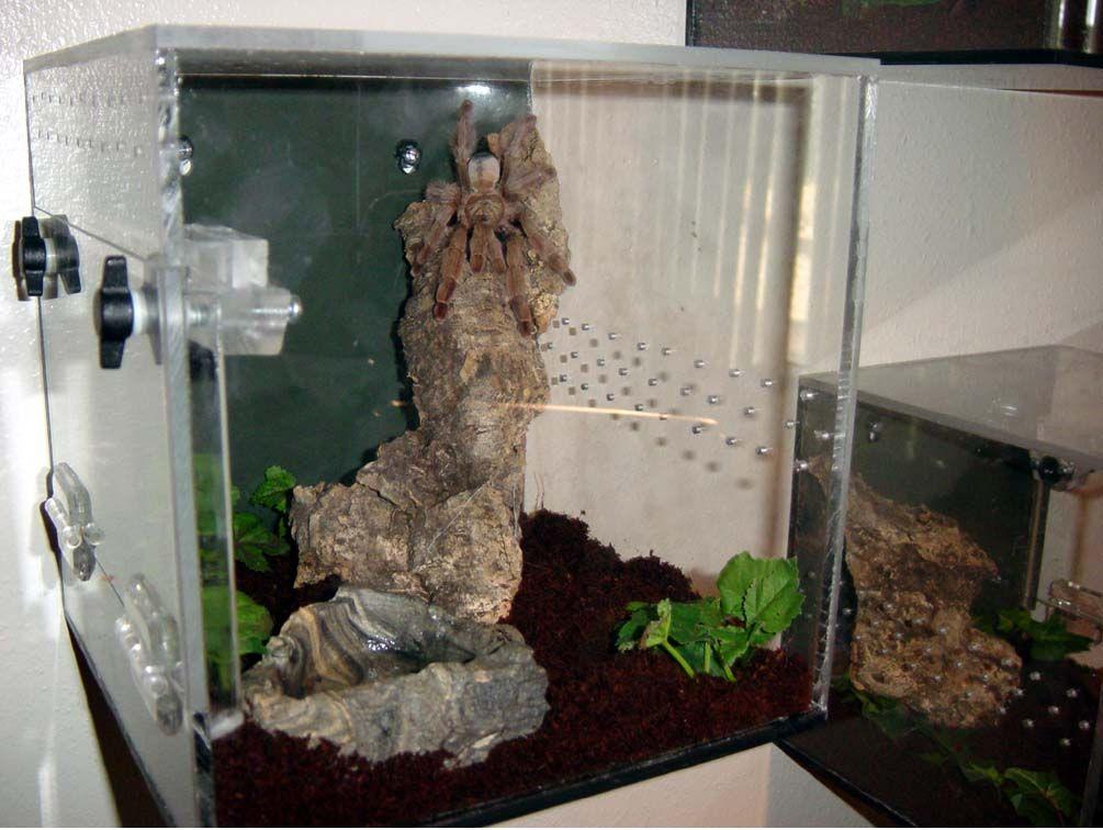 Hanging Acrylic Tarantula Enclosures Garden And Home