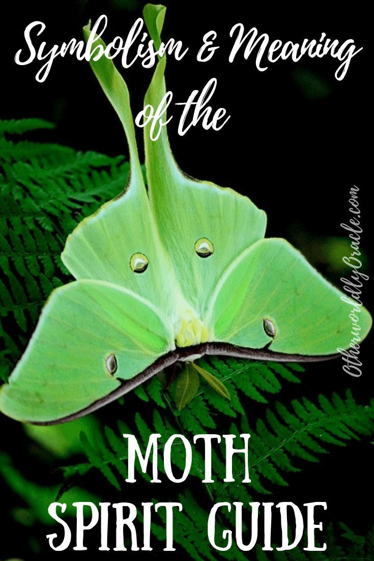 Moth Symbolism, Folklore & The Moth Spirit Guide | Moth ...