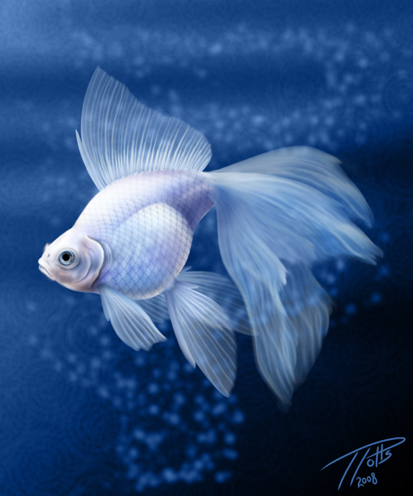 White Goldfish By Dragonosx On Deviantart Goldfish Art Fish Painting Beautiful Fish