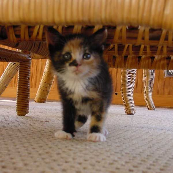 serious question should kittens come with an instruction manual rh pinterest co uk User Guide Guide Book