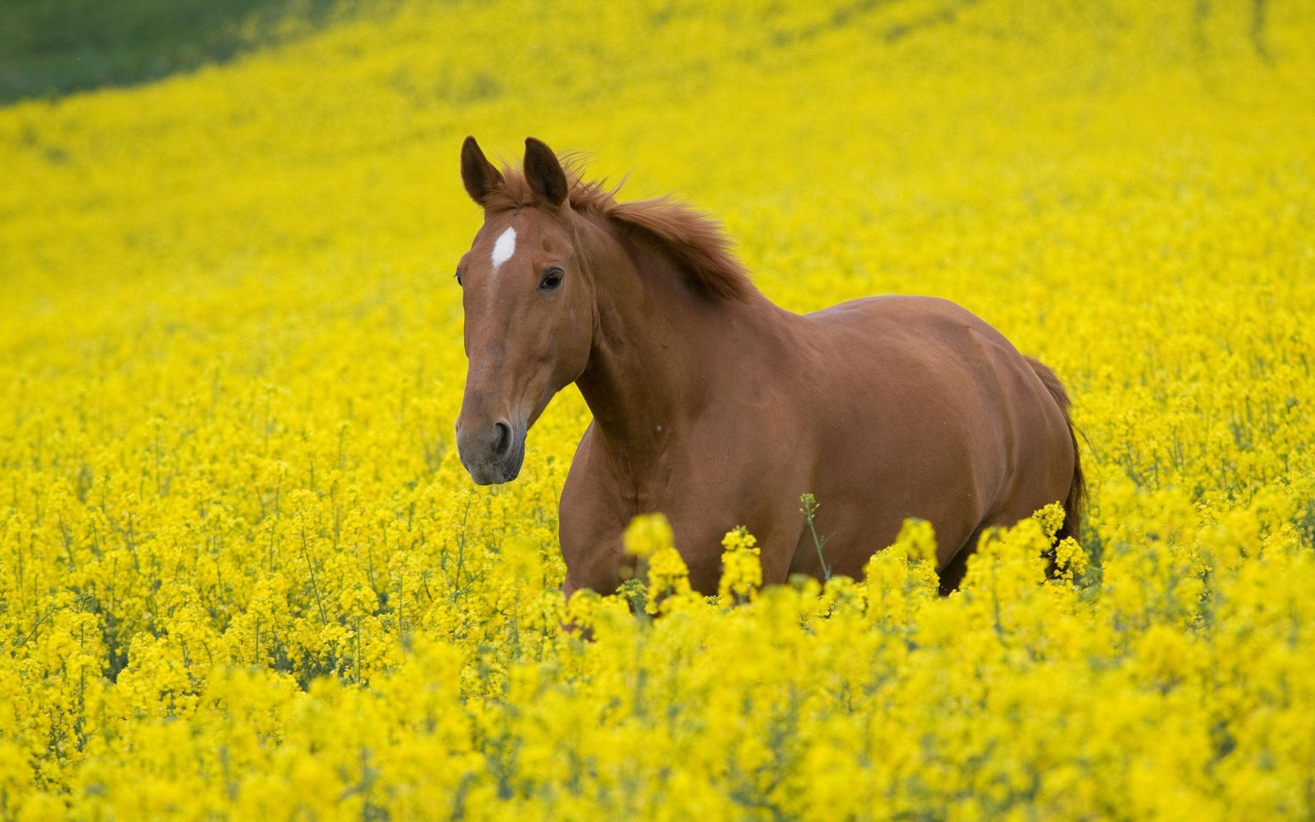 Beautiful Wallpaper Horse Yellow - 91ea4932b55162f6d10f1acfcc9b59a1  Graphic_644964.jpg