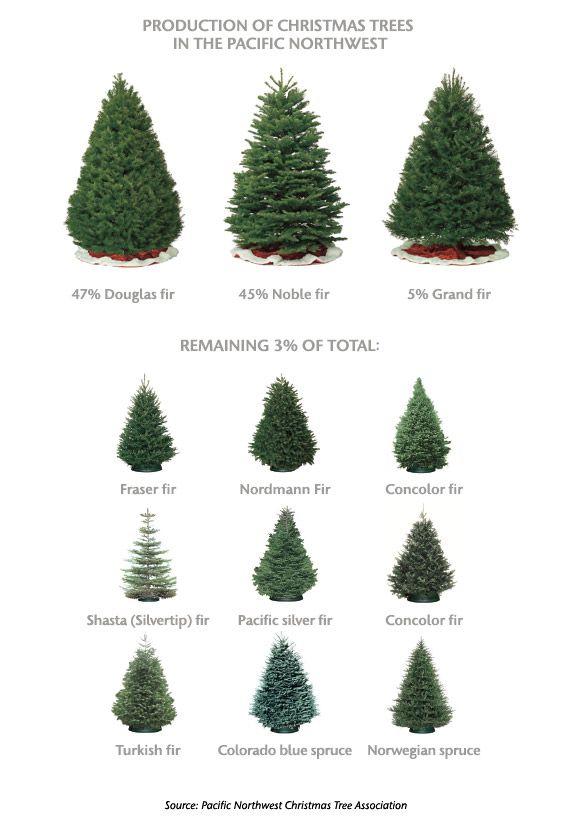 Washington State Magazine Christmas Tree Guide Types Of Christmas Trees Live Christmas Trees