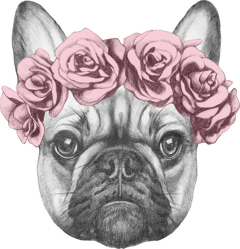 French bulldog with rose crown sticker by joellis