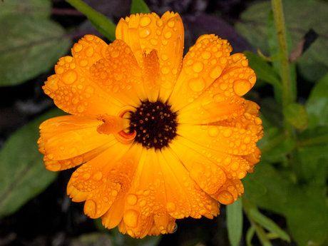 Orange Splash by Al Mullen