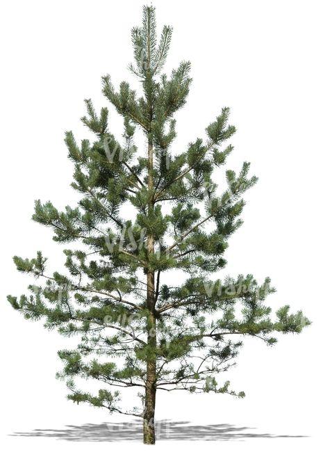 Pin On Trees Cutouts