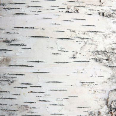 Country Rustic Woodland Birch Tree Bark Wring Paper Features A Design