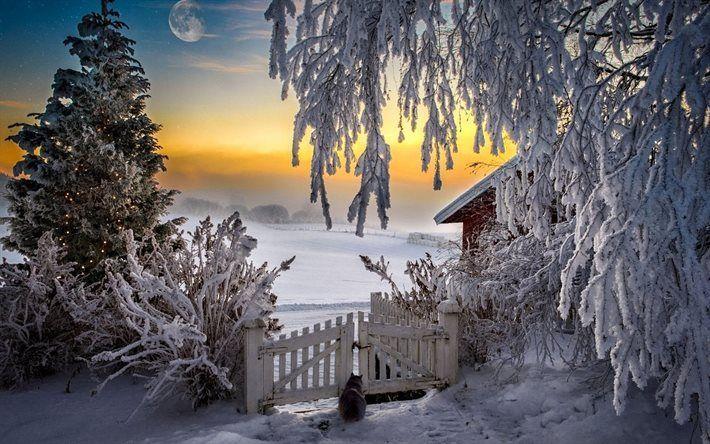 risultati immagini per foto paesaggi invernali per desktop