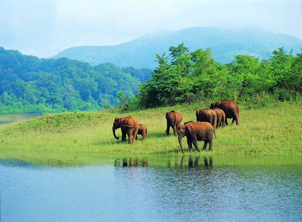 15 Sanctuaries And National Parks In India That You Must