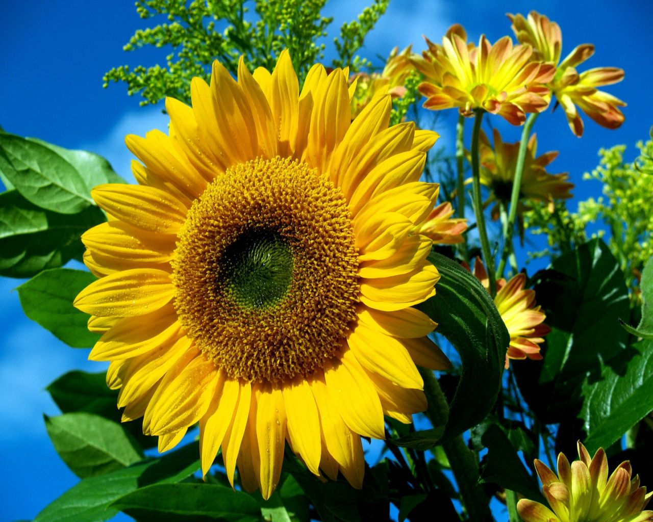 Bright blue and yellow floral backgrounds bright sun flower bright blue and yellow floral backgrounds bright sun flower against sky wallpaper there is izmirmasajfo Choice Image