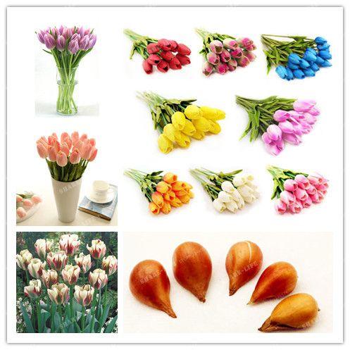 2 10pcstrue Couleur De Mélange Tulipe Ampoules (Pas Tulipe Graines), Tulipes Variété Frais Bulbeuses Racine Fleurs Plantés fleur ampoules de bonne qualité