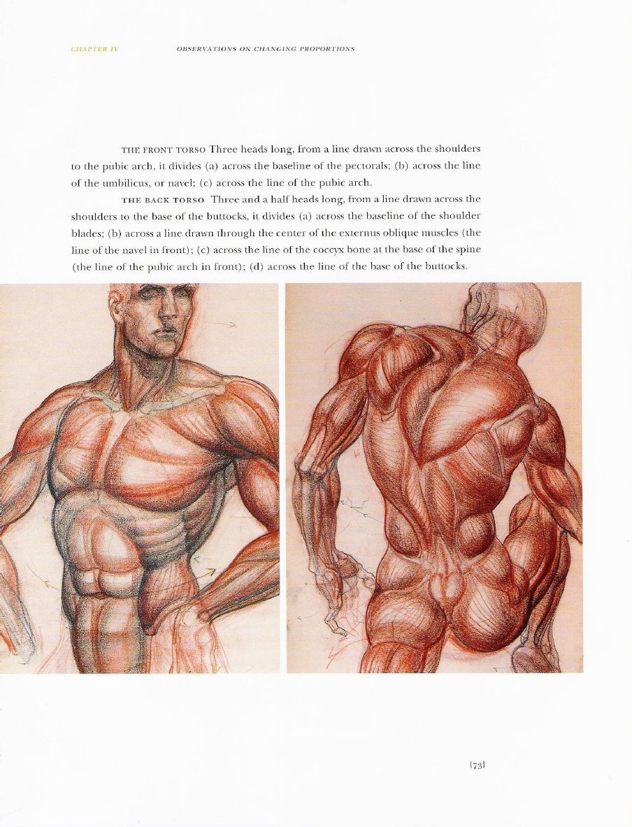 Burne Hogarth - Dynamic Anatomy (Revised and Expanded).pdf | CB ...
