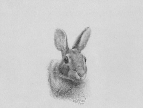 Animal art rabbit drawing  Bunny drawing Online images and Bunny