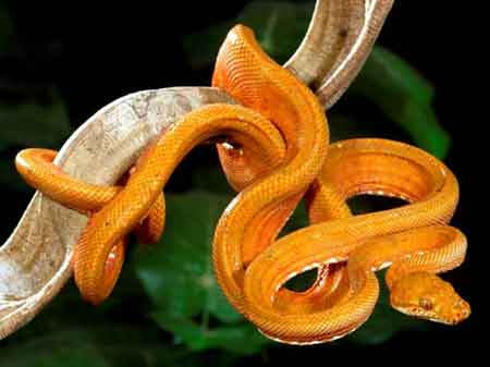 Beautiful New Snake Species Discovered in Brazil