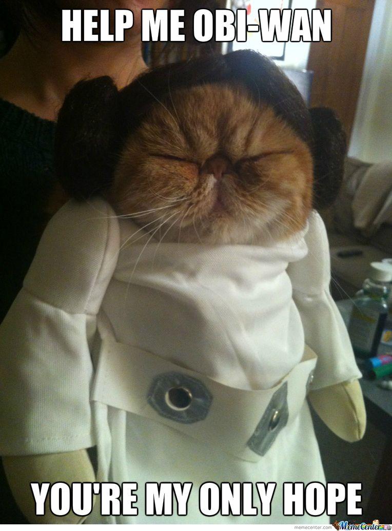 Derpy Cat Leia by cuteasfuck - Meme Center