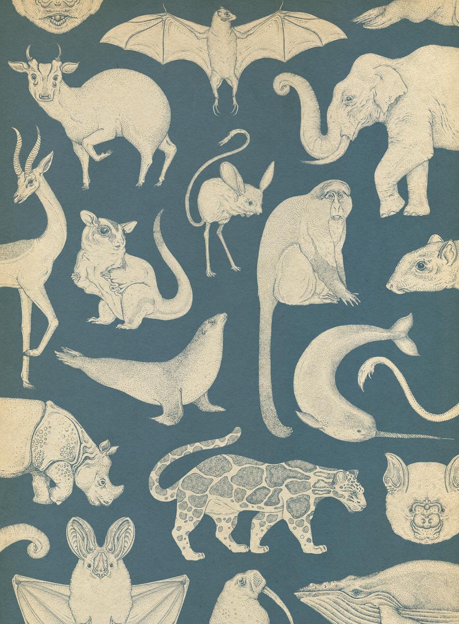 Mammals Wallpaper By Katie Scott From Animalium In 2019