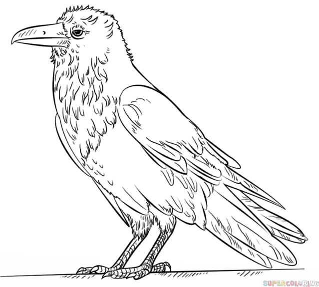 Ravens kids coloring pages ~ How to draw a raven step by step. Drawing tutorials for ...