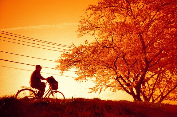 LC-A+ and Lomography Redscale film
