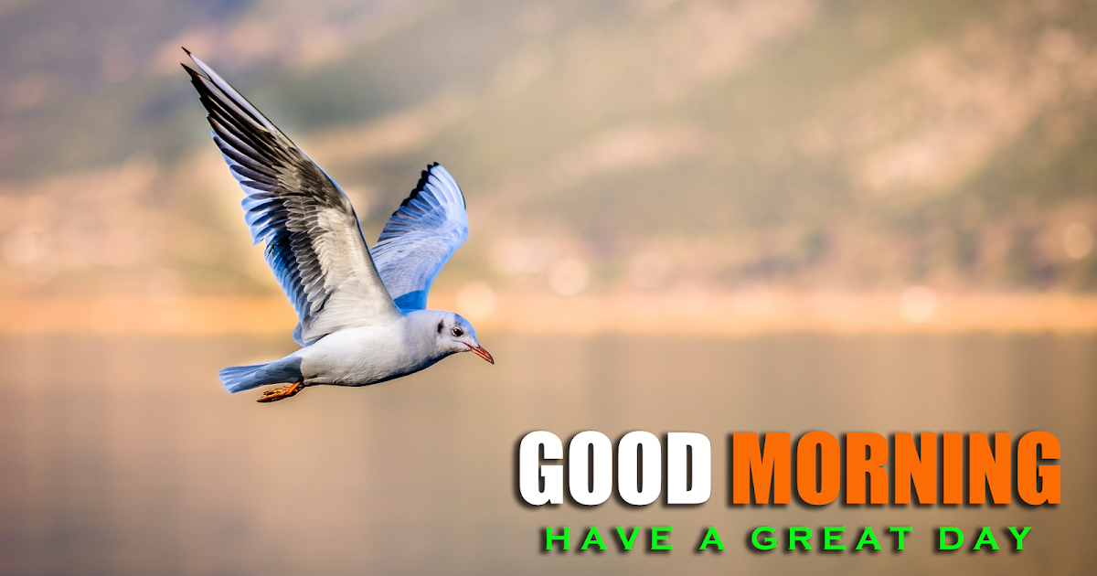 Good Morning Birds Images Free Download Good Morning Greetings Images Good Night Image Good Morning