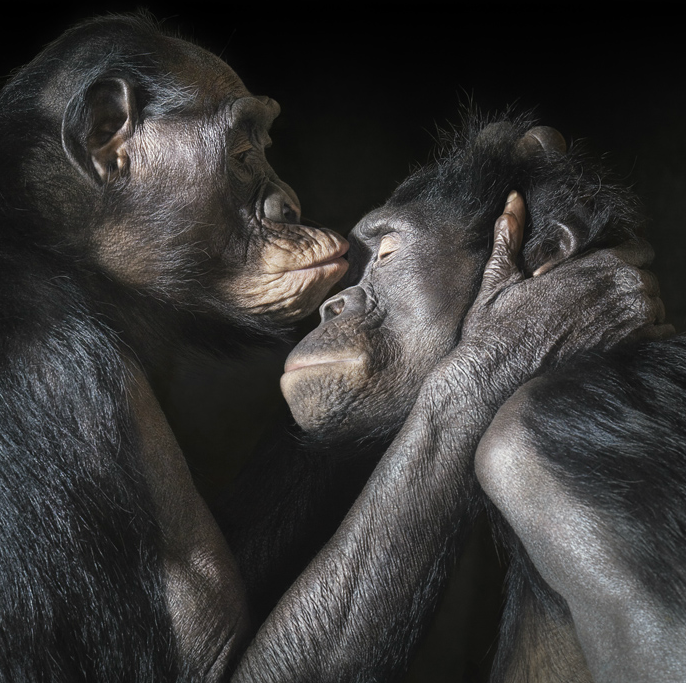 doloresdepalabra: Tim Flach Photography