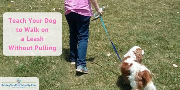 Walking On A Leash How To Teach Your Dog To Walk On A Leash Dogs