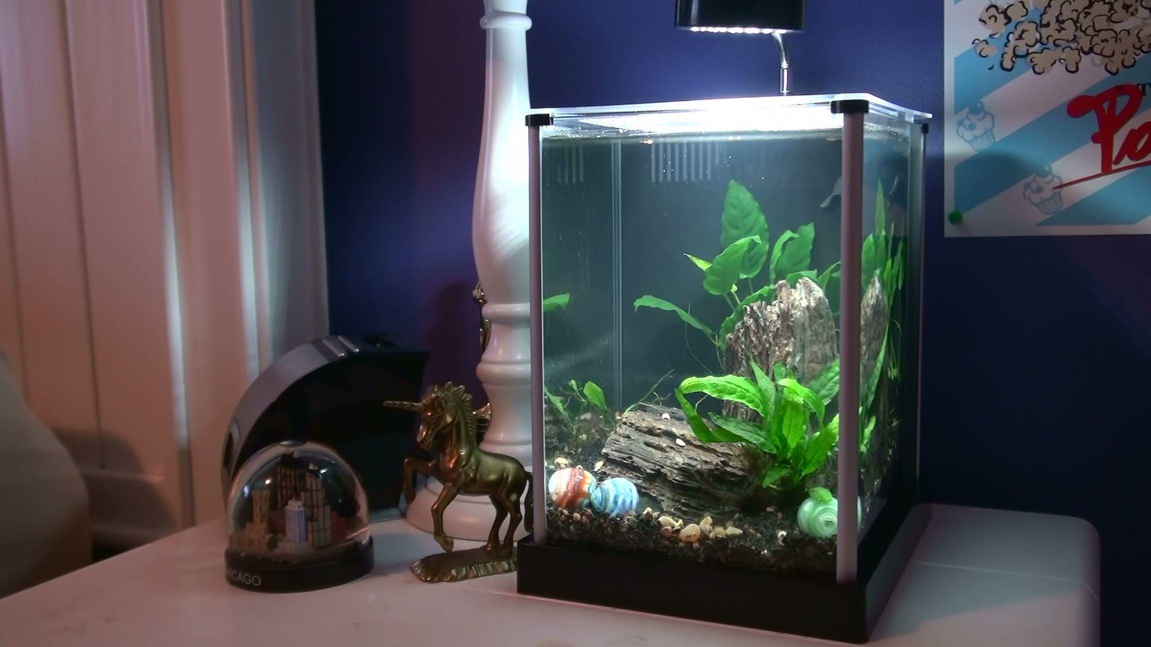 Fluval spec 2 gallon setup aquariums pinterest aquariums for Aquarium boule 20 litres