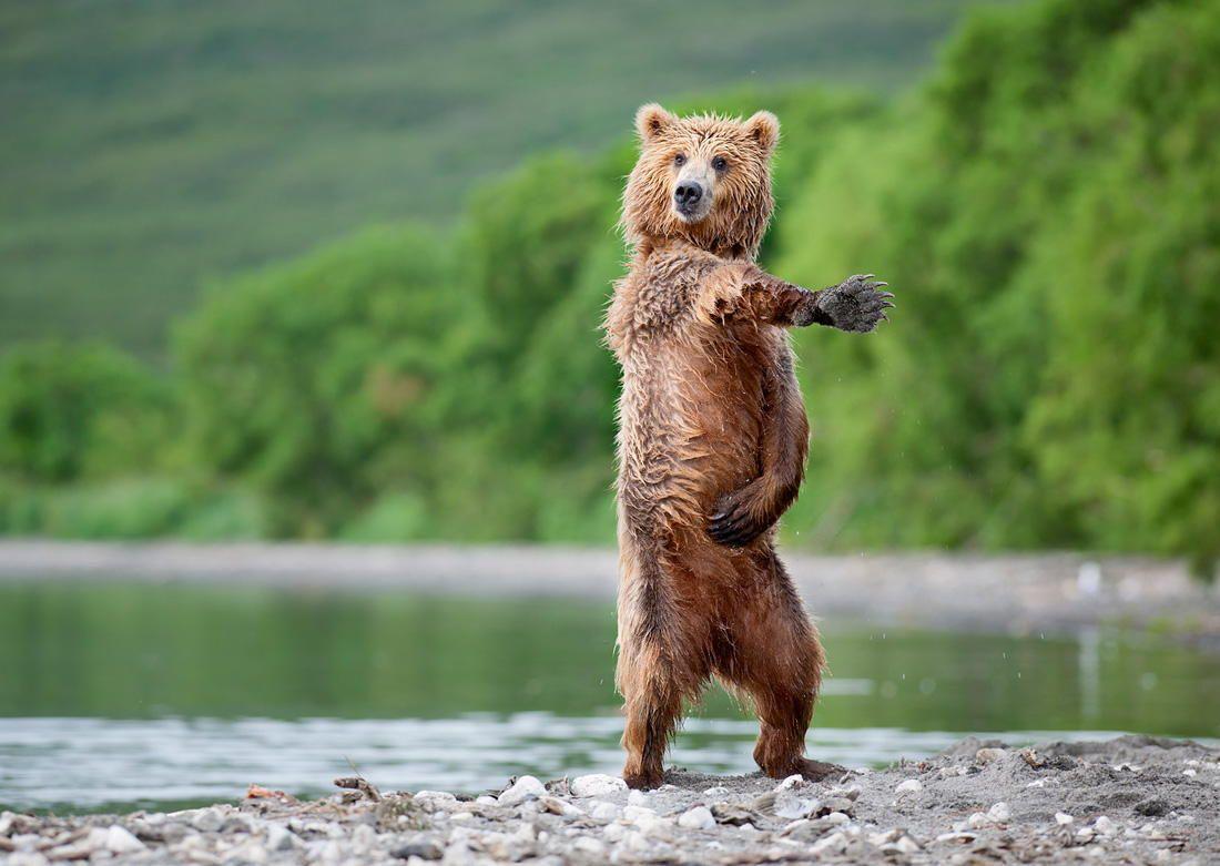"I like to move it ! by Nikolai Zinoviev on 500px.  [I hear ""Hey, Macarena!"" when I see this. :) ]"