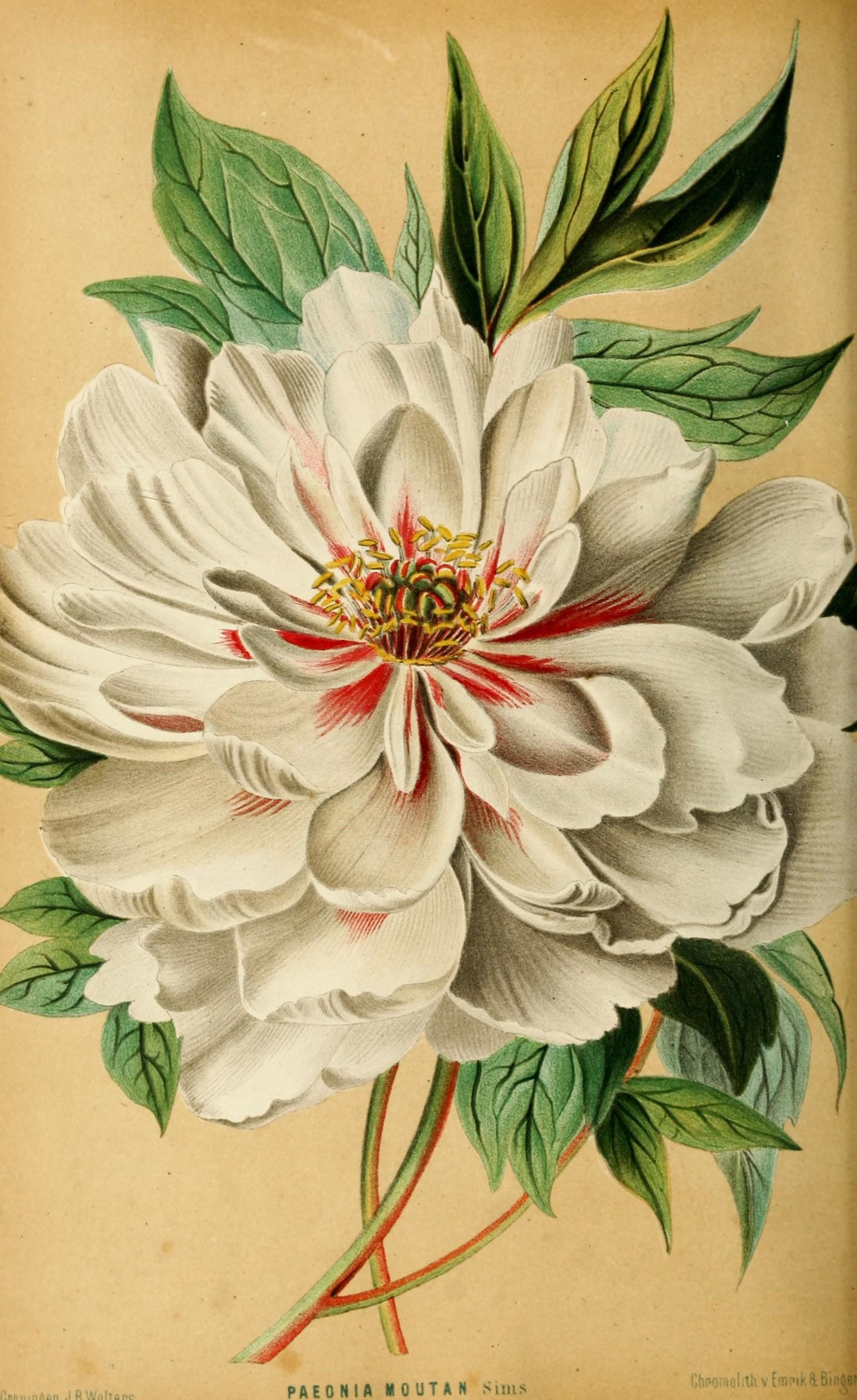 Pin Cece Art Botanical Prints Flowers