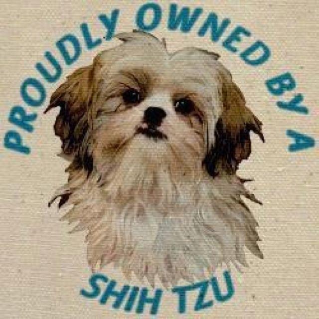 Pin By Lora Lee On Lol Shih Tzu Shitzu Dogs Shih Tzu Dog