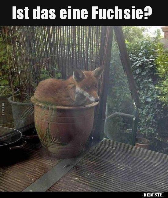 Photo of Ist das eine Fuchsie? ..   Lustige Bilder, Sprüche, Witze, echt witzig