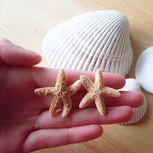 NAUTICAL BEACH SHELL STARFISH STUD EARRINGS /& GIFT BAG