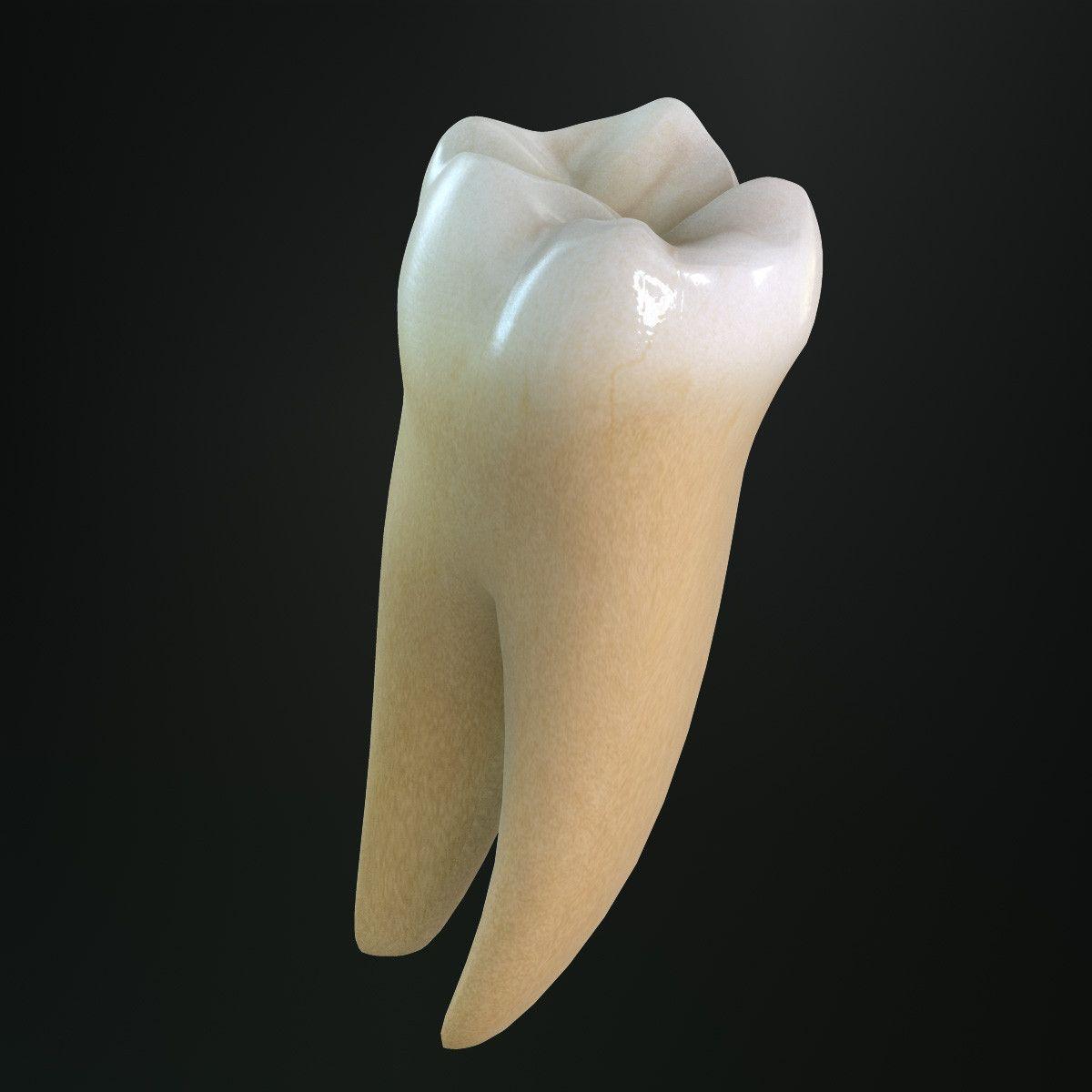 спеть мне картинки зубов человека с корнями поможет увидеть путь