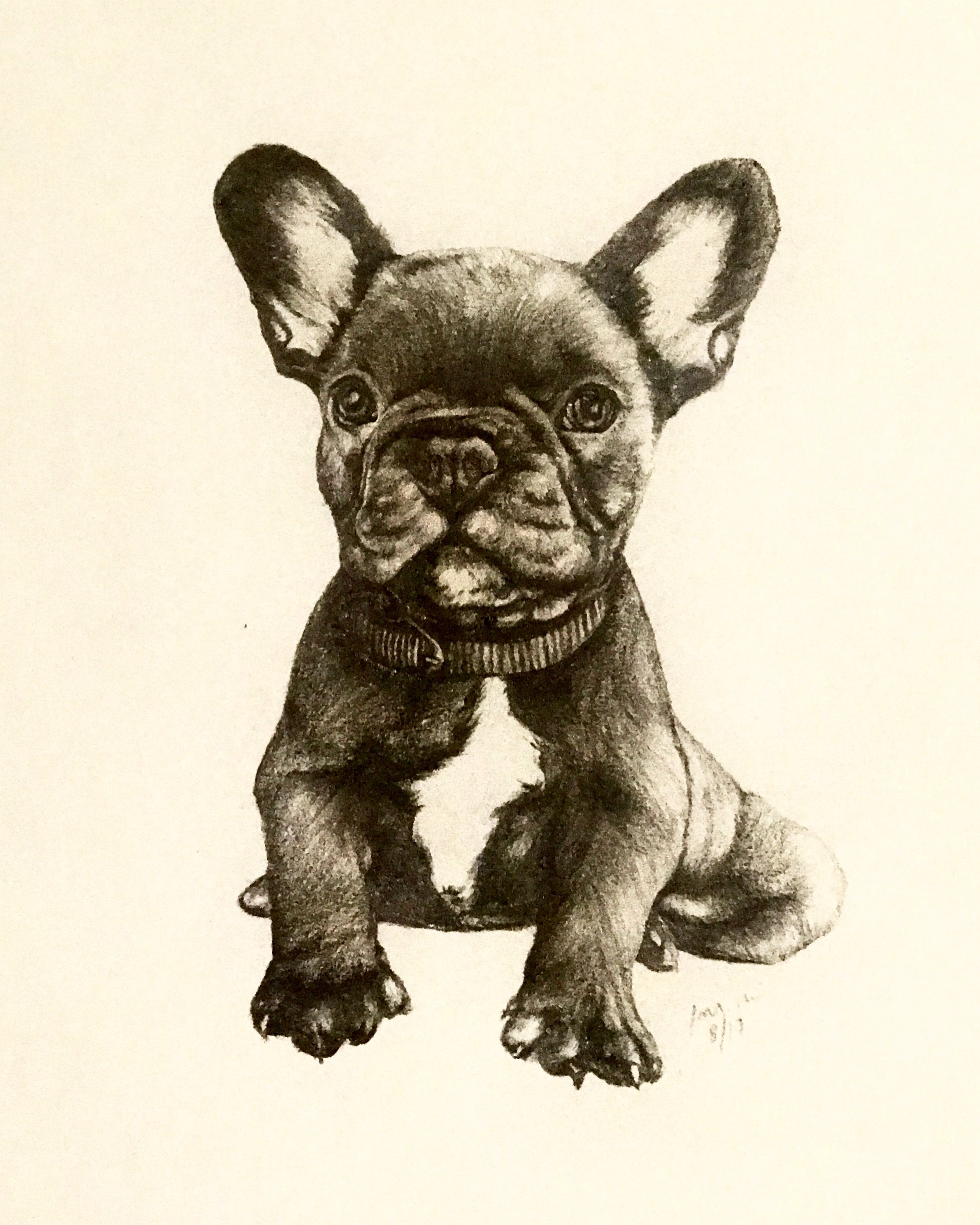 French Bulldog Puppy In Tonal Pencil This Cute Illustration Is
