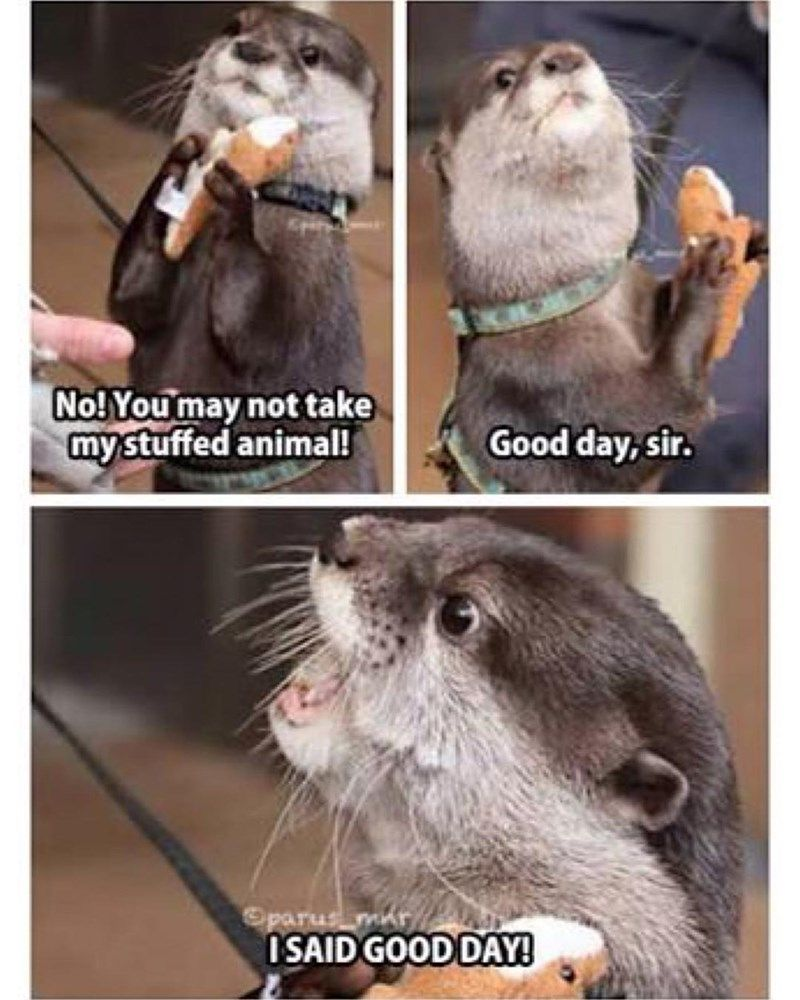 17 Hilarious Animal Memes To Keep You Going