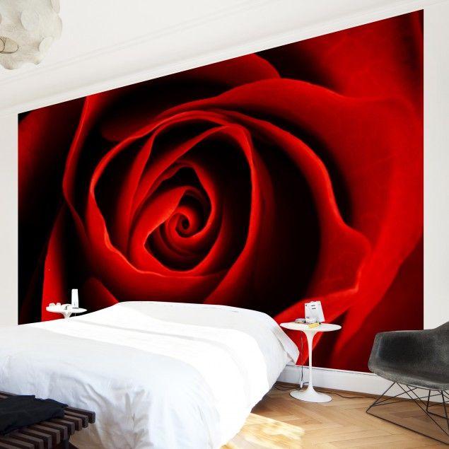 Fototapete Rosen - Liebliche Rose - Vliestapete Breit in ...