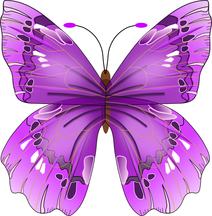 Pretty Purple Butterflies