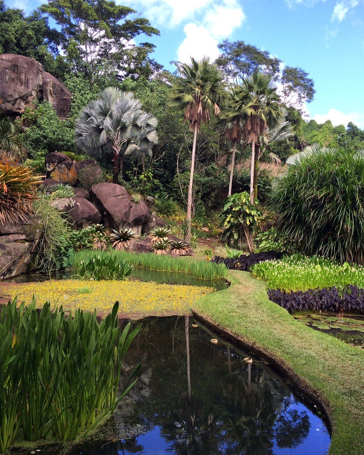 The Talent Discovers Many Native Brazilian Plant Species That Surround Legendary Landscape Architects Home And Studio