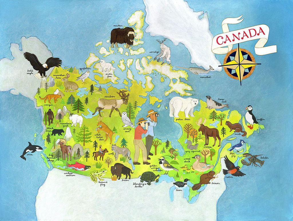 Canada buscar con google canad pinterest buscar con google canada buscar con google gumiabroncs Gallery