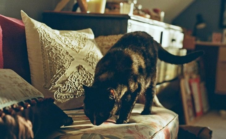 Furniture · Tips For Keeping Cats Off ...