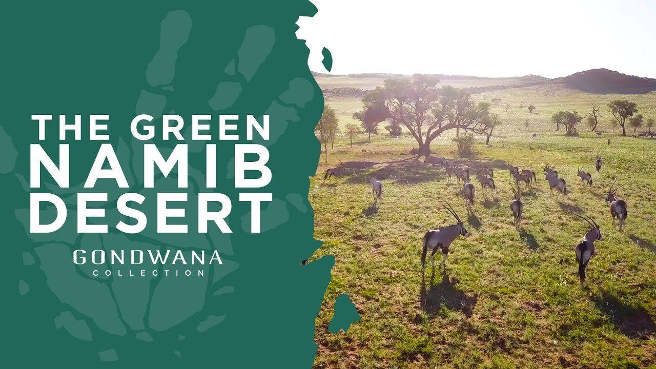 A Namibian Moment The Green Namib Desert Namib Desert Deserts