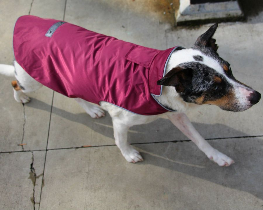 Best winter dog coat harness opening the sierra dog