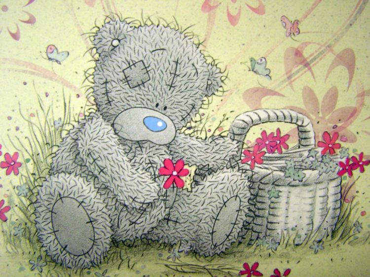 картинка медведя тедди же