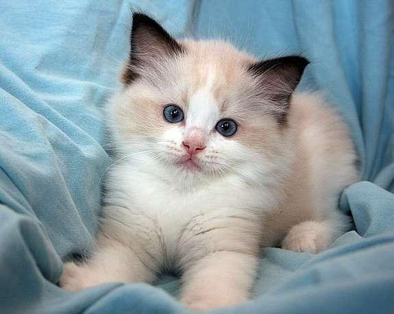 Pin On Cat S Kitten S