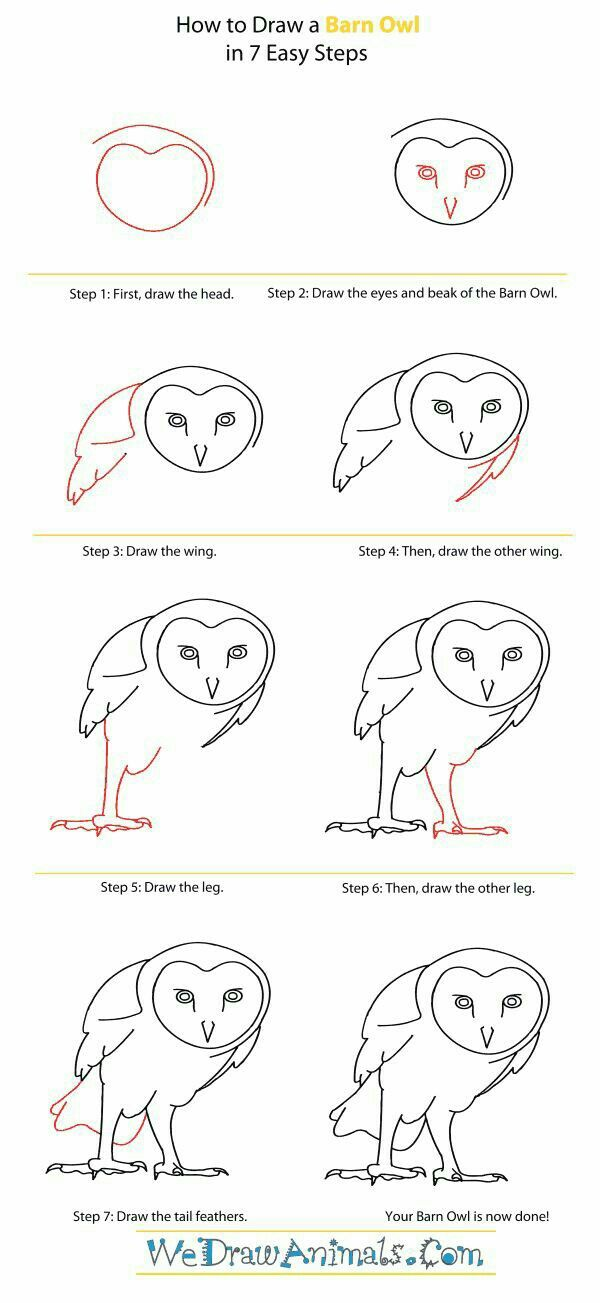 How To Draw A Barn OwlDrawing Step Bird