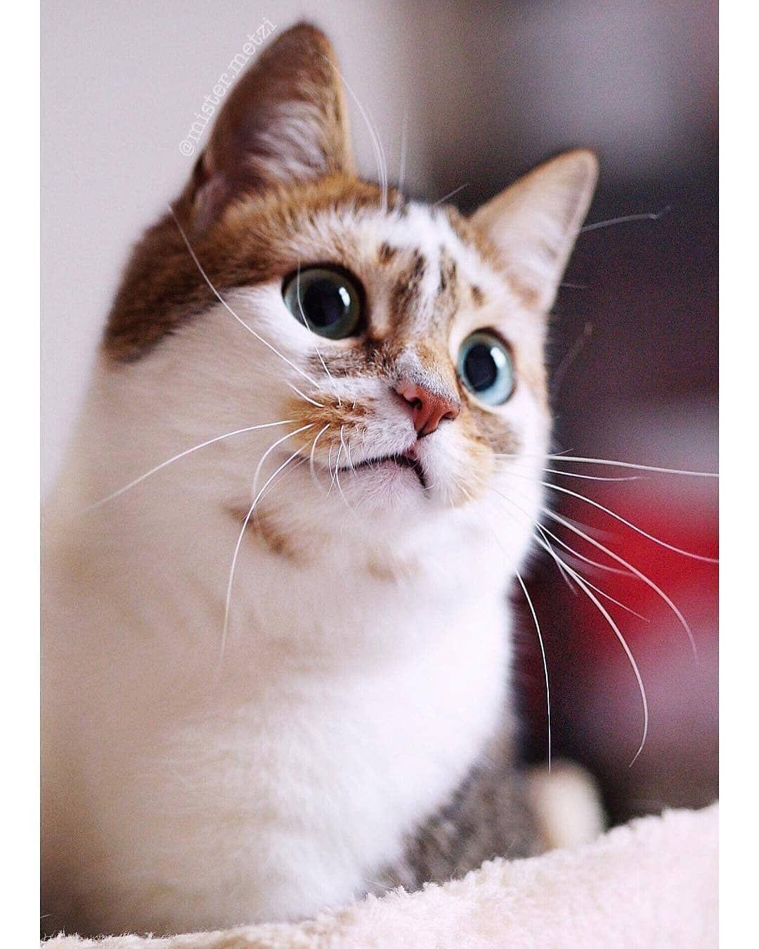 Cute Cats Wallpaper Cute Cat Wallpaper Cute Cats Cats