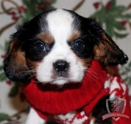 Buddy is a sweet, laid back little guy that will bring laughter and love to your life. http://on.pbb.co/1zVg9a3