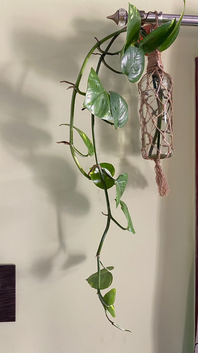 DIY - Easy Macrame Plant Hanger   Hanging Planter Idea   Easy Beginner Tutorial   Gardening Ideas